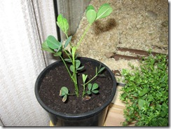 Planten 003